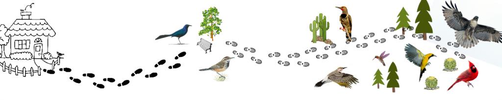 nature-walk-bird-path